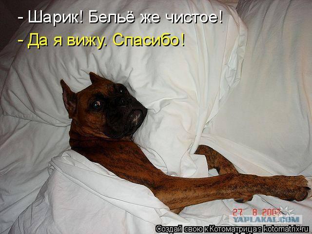 http://forumimage.ru/uploads/20181121/15427963171918583.jpg