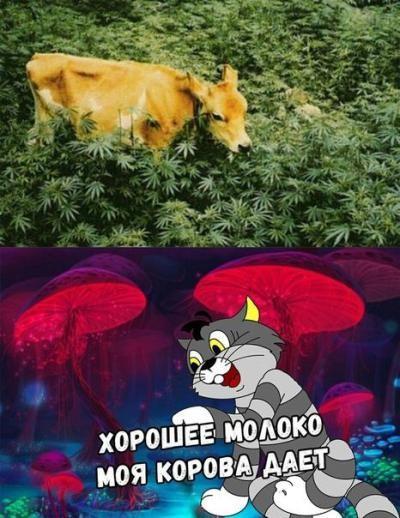 http://forumimage.ru/uploads/20181125/154317619329092519.jpg