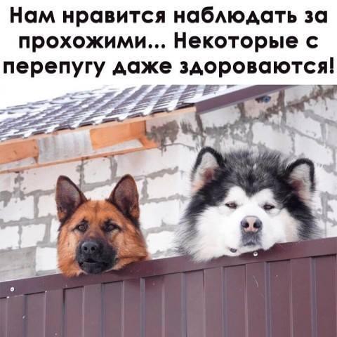 http://forumimage.ru/uploads/20181215/154490784997555010.jpg