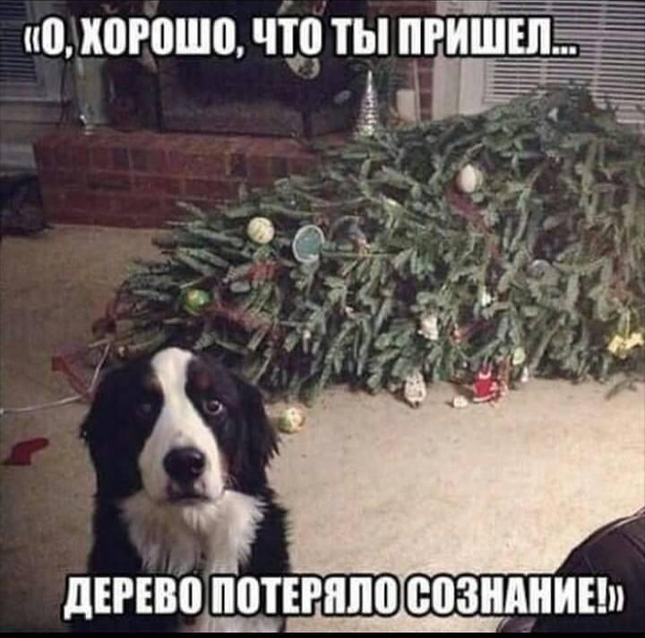 http://forumimage.ru/uploads/20181217/15450127978107753.jpg