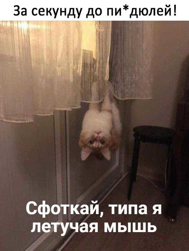 http://forumimage.ru/uploads/20181222/154545616849172143.jpg