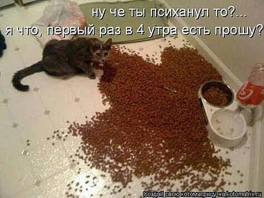http://forumimage.ru/uploads/20181223/154558021363347131.jpg