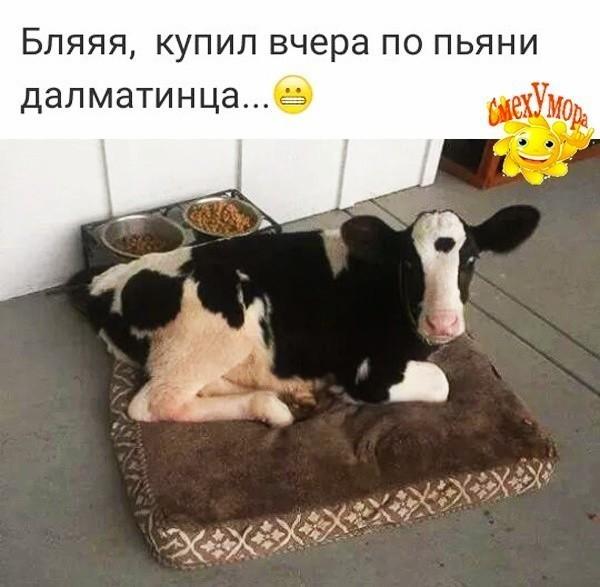 http://forumimage.ru/uploads/20181225/154575818799906314.jpg