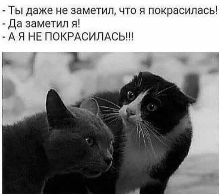 http://forumimage.ru/uploads/20190112/154732387156035359.jpg