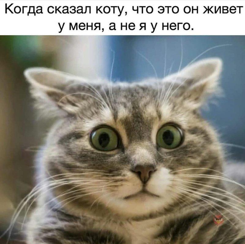 http://forumimage.ru/uploads/20190114/15474607760708992.jpg