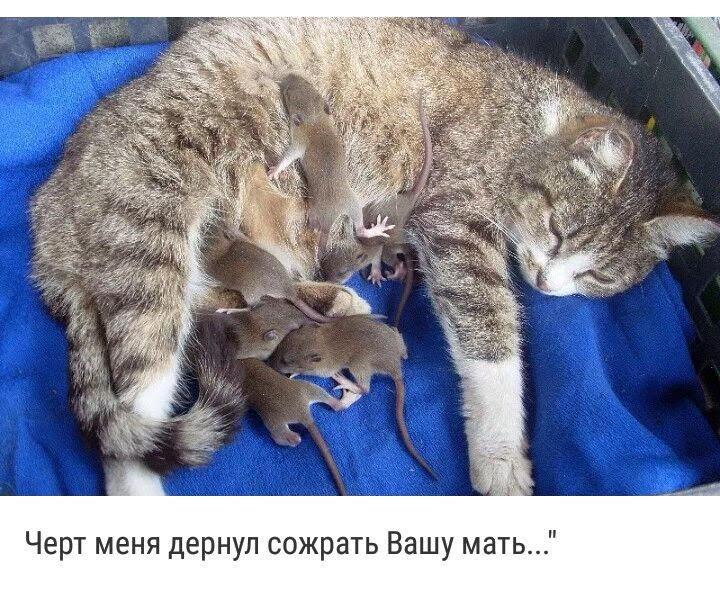 http://forumimage.ru/uploads/20190115/154756110596322872.jpg