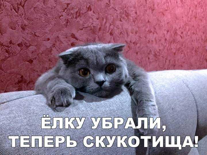 http://forumimage.ru/uploads/20190116/154762044243205632.jpg