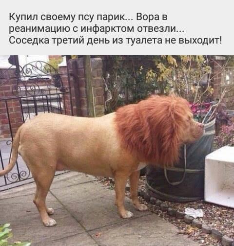 http://forumimage.ru/uploads/20190210/154980330556208178.jpg