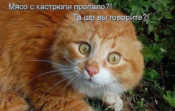 http://forumimage.ru/uploads/20190219/155059818369049650.jpg