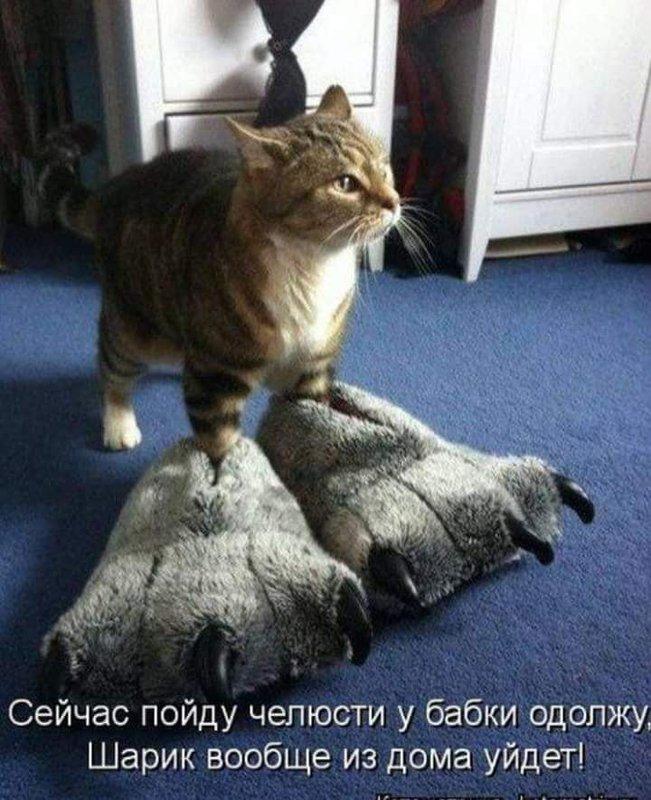 http://forumimage.ru/uploads/20190225/155110982972792339.jpg