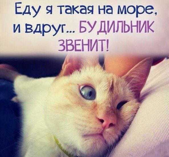 http://forumimage.ru/uploads/20190401/155410786674675323.jpg