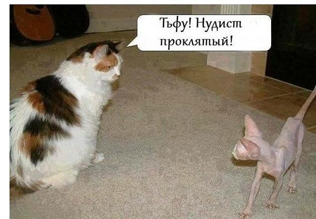 http://forumimage.ru/uploads/20190408/15547018550042715.jpg