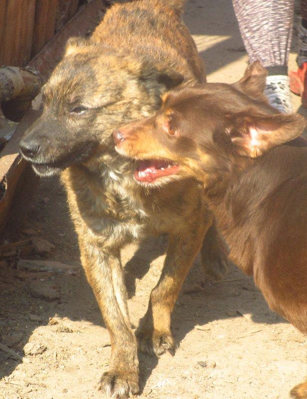 пес с больной лапой • Темы животных