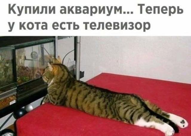 http://forumimage.ru/uploads/20190411/155499642621781139.jpg