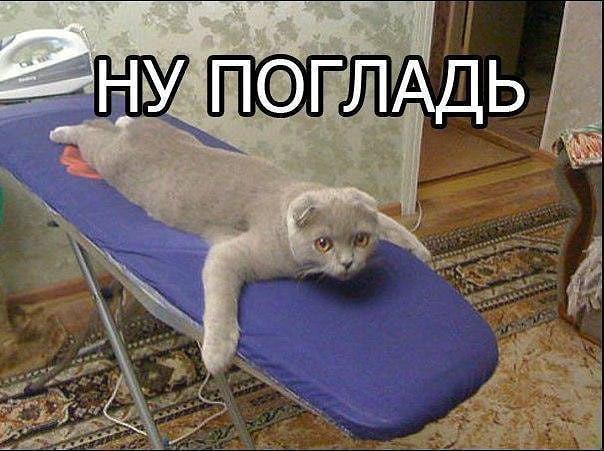 http://forumimage.ru/uploads/20190411/155499643209007582.jpg