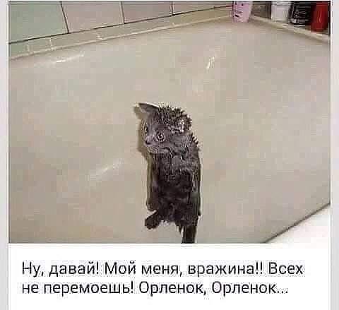 http://forumimage.ru/uploads/20190416/155541636418075961.jpg