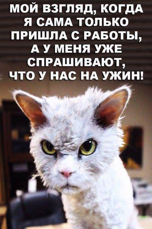 http://forumimage.ru/uploads/20190424/155608925897201766.jpg