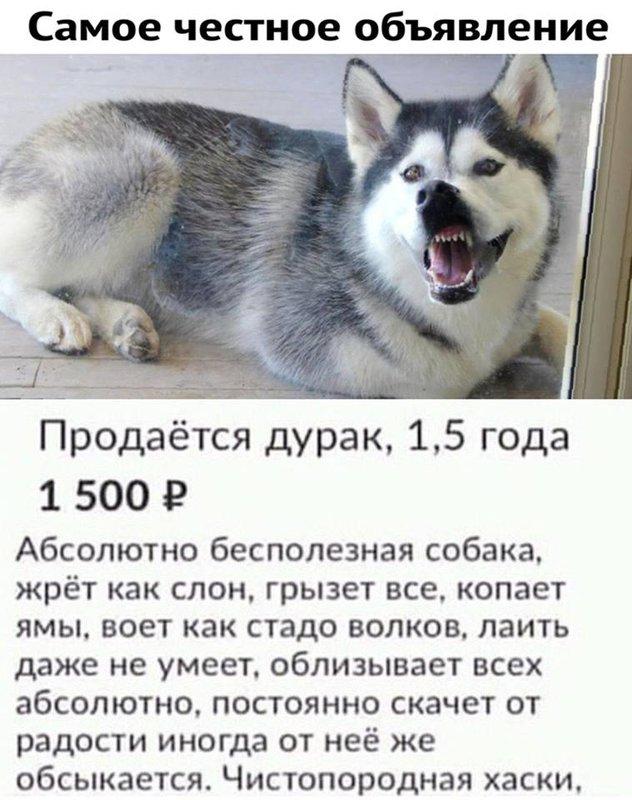 http://forumimage.ru/uploads/20190424/155608927825077335.jpg