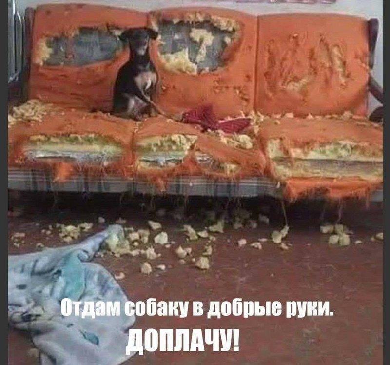 http://forumimage.ru/uploads/20190424/155608944210225415.jpg