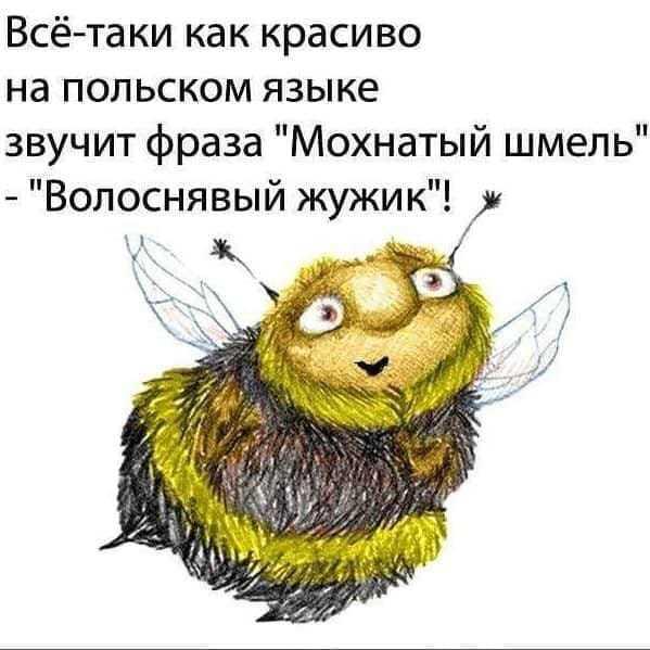 http://forumimage.ru/uploads/20190520/15583947345834608.jpg