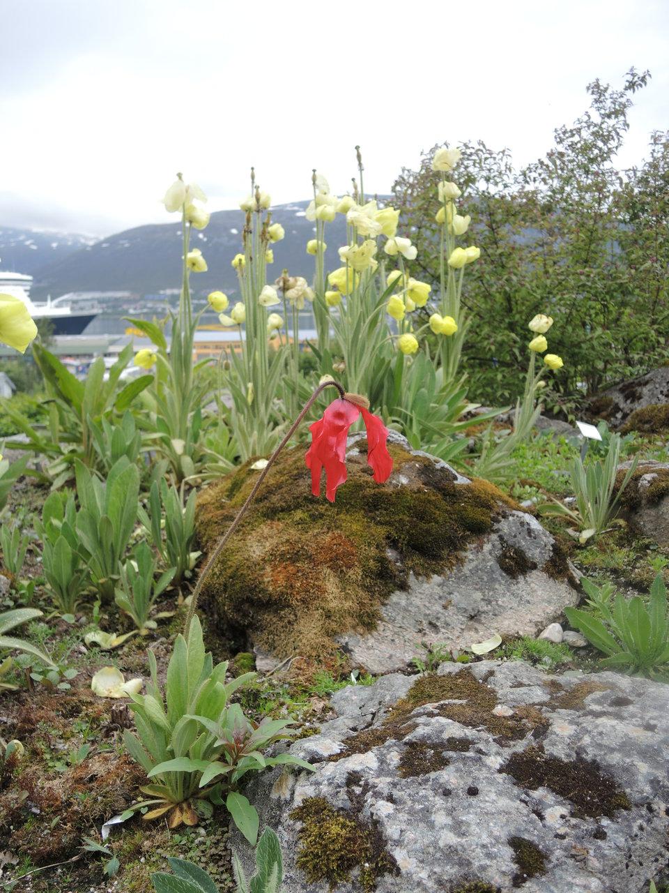 Самый северный ботанический сад. Тромсё, Норвегия 2013 год