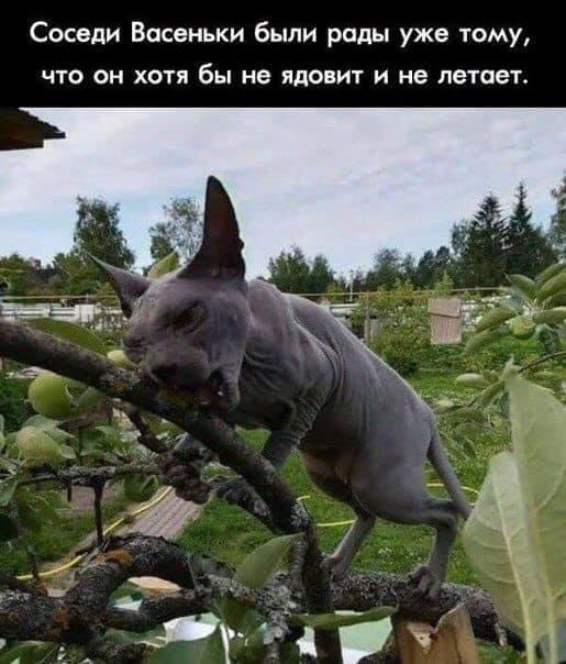 http://forumimage.ru/uploads/20190606/155984112997885227.jpg