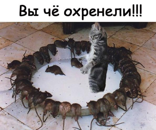 http://forumimage.ru/uploads/20190606/155985378393924245.jpg