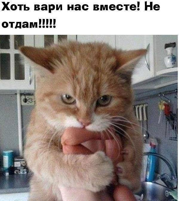 http://forumimage.ru/uploads/20190619/156096351018533889.jpg