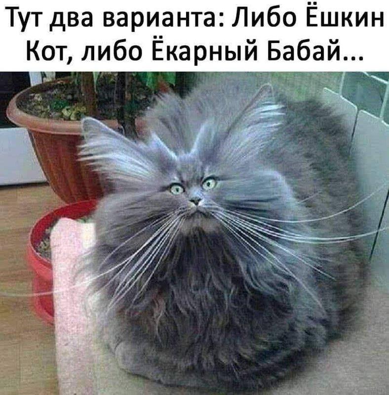http://forumimage.ru/uploads/20190621/156114878604719132.jpg