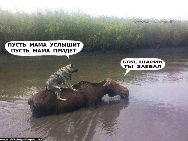 http://forumimage.ru/uploads/20190626/156155213366583592.jpg