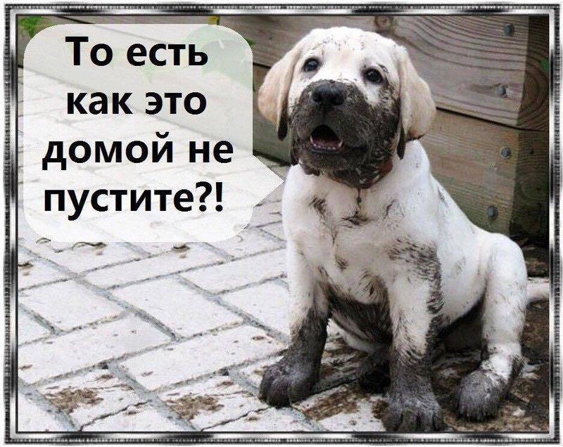 http://forumimage.ru/uploads/20190626/156155214450926276.jpg