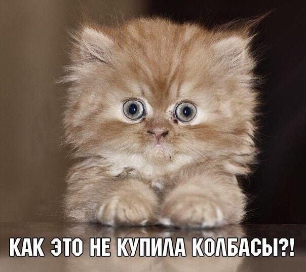 http://forumimage.ru/uploads/20190703/156218961284565380.jpg