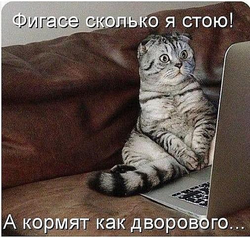 http://forumimage.ru/uploads/20190705/156232123859109899.jpg