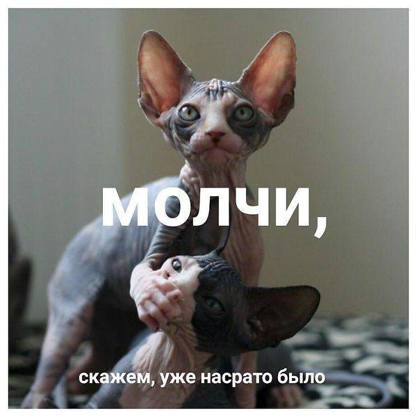 http://forumimage.ru/uploads/20190713/156303138254164924.jpg