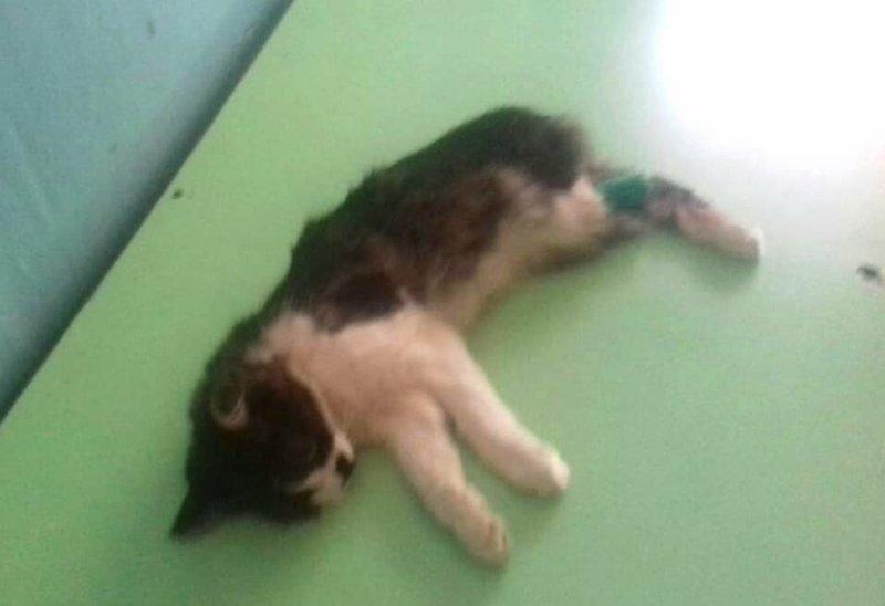 Фин. отчет котенка Фаника