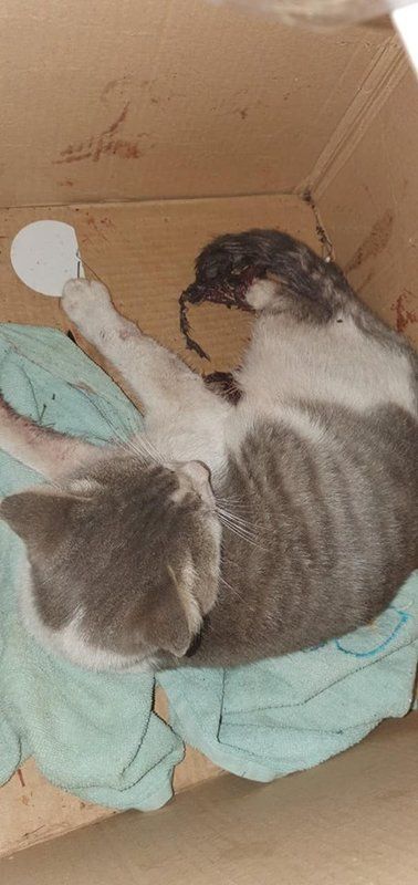 Фин. отчет кота с оторваной лапой