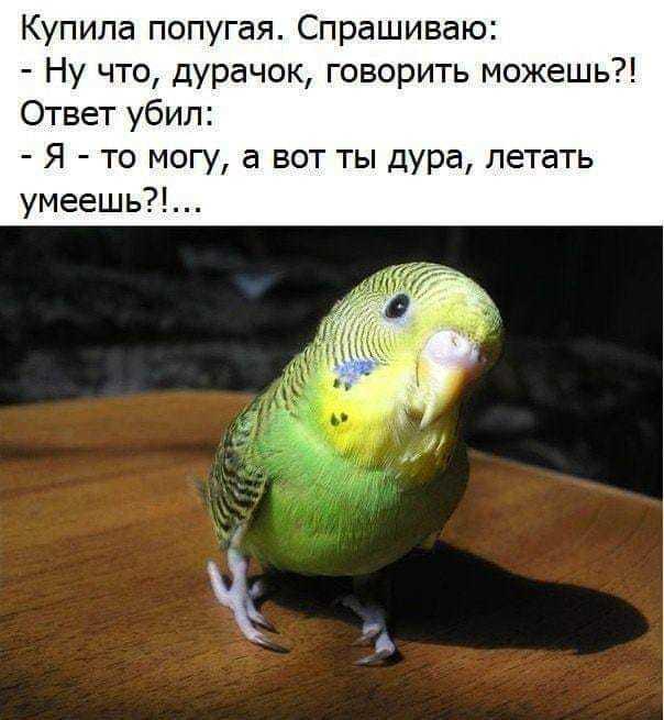 http://forumimage.ru/uploads/20190913/156836420038914223.jpg