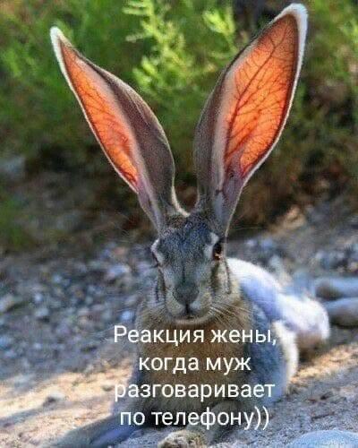 http://forumimage.ru/uploads/20190922/156918538809282967.png