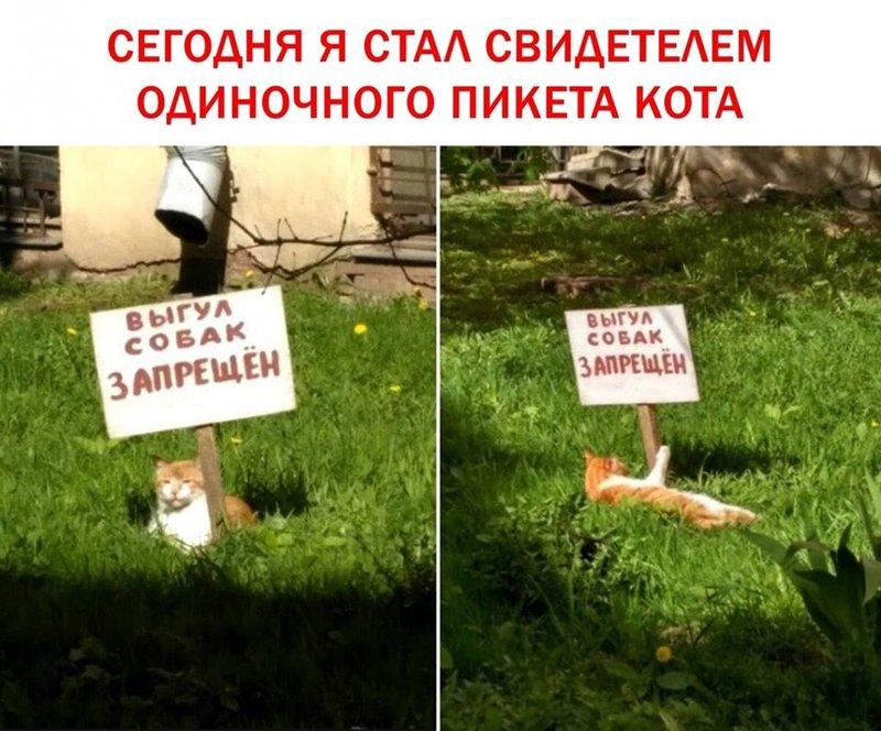 http://forumimage.ru/uploads/20190922/156918539922805296.jpg