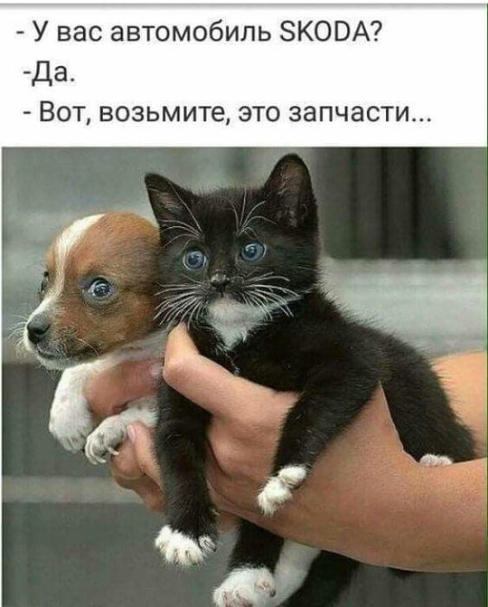 http://forumimage.ru/uploads/20190927/15696097711158874.jpg
