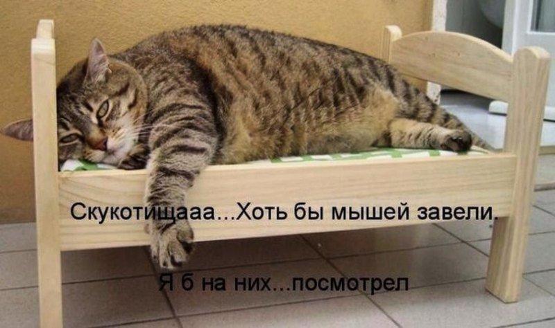 http://forumimage.ru/uploads/20191008/157055331844017970.jpg