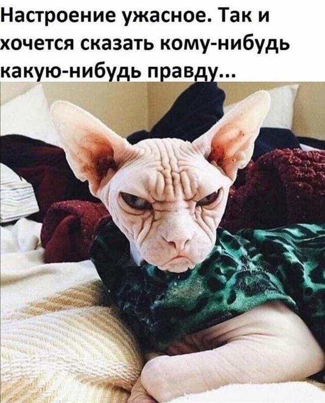 http://forumimage.ru/uploads/20191008/157056520998409245.jpg