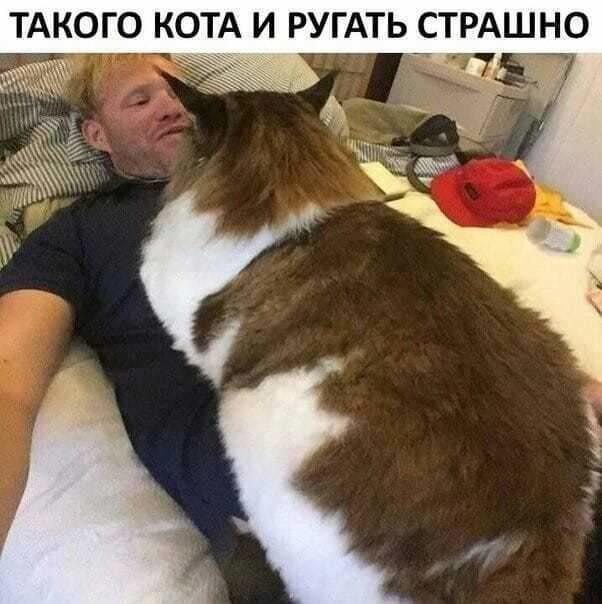 http://forumimage.ru/uploads/20191008/157056522159255916.jpg