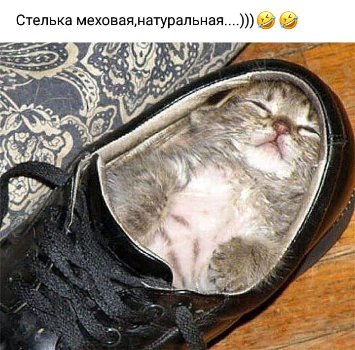 http://forumimage.ru/uploads/20191008/1570565228030598.jpg