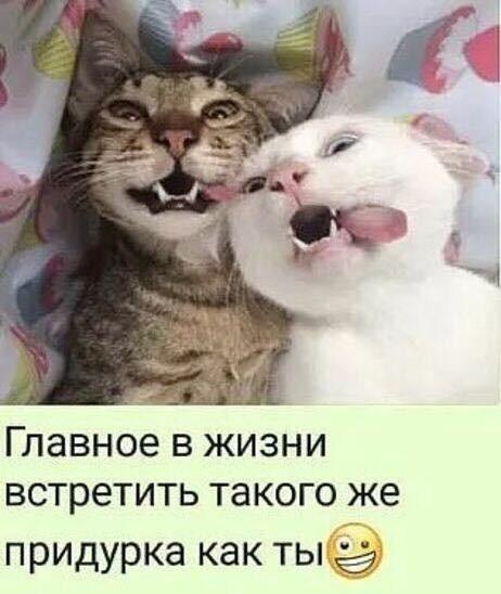 http://forumimage.ru/uploads/20191008/157056523402226257.jpg