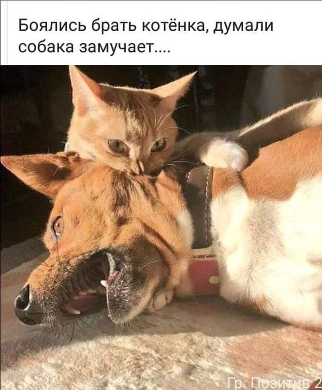 http://forumimage.ru/uploads/20191008/157056524005991683.jpg