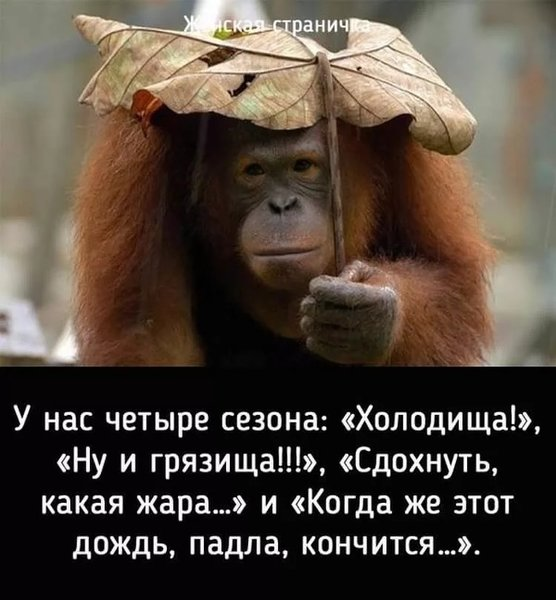 http://forumimage.ru/uploads/20191010/15707294726946270.jpg