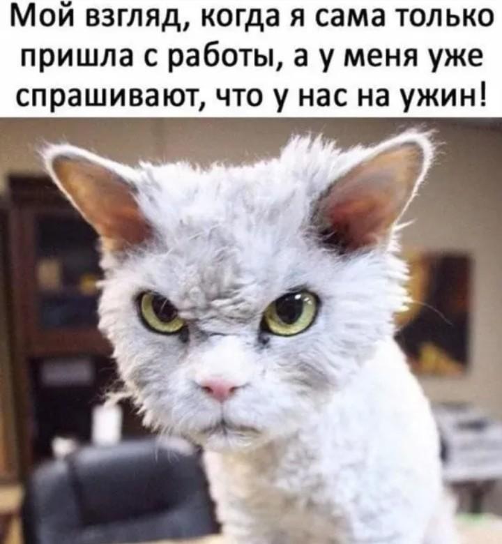 http://forumimage.ru/uploads/20191010/157073217321164576.jpg