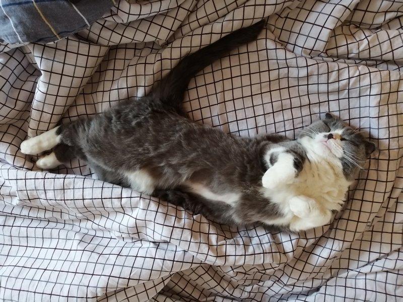 Усатый рейс - Территория котиков