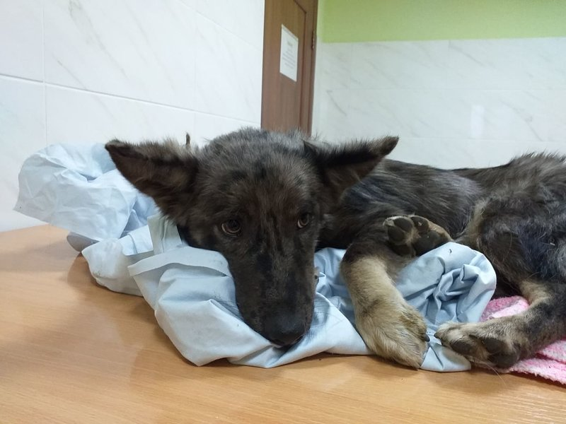 пса с переломами двух задних лап • Фин. отчеты